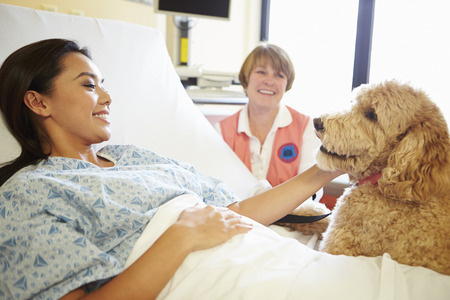 Pet Therapy Dog Visiting Female Patient In Hospital photo