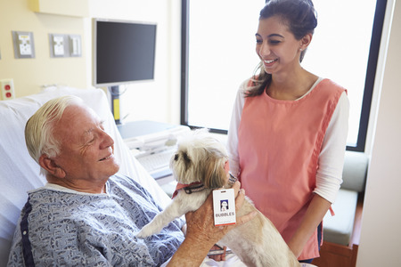 pet therapy: Pet Therapy Dog Visiting Senior Male Patient In Hospital Stock Photo