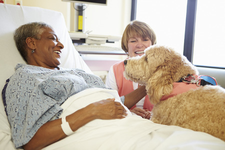pet therapy: Pet Therapy Dog Visiting Senior Female Patient In Hospital Stock Photo