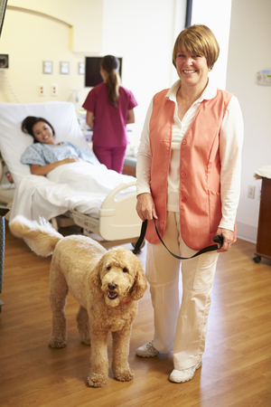 pet therapy: Portrait Of Pet Therapy Dog Visiting Female Patient In Hospital