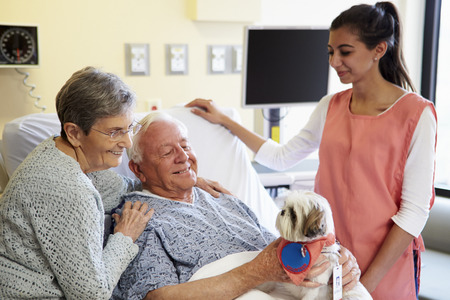 Pet Therapy Dog Visiting Senior Male Patient In Hospital Stock Photo