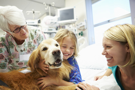 working animal: Young Girl Being Visited In Hospital By Therapy Dog