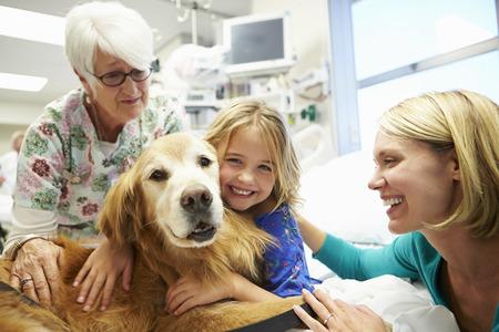 테라피 개가 병원에 방문한 어린 소녀