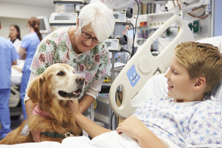 pet therapy: Therapy Dog Visiting Young Male Patient In Hospital