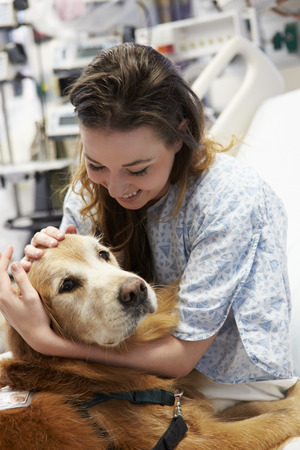 Therapy Dog Visiting Young Female Patient In Hospital Stock Photo