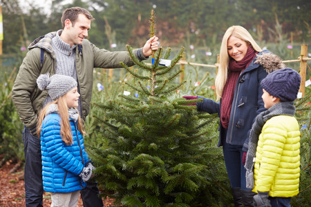 Outdoor Family Choosing Christmas Tree Together Standard-Bild