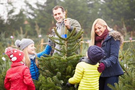 Outdoor Family Choosing Christmas Tree Together Stock Photo