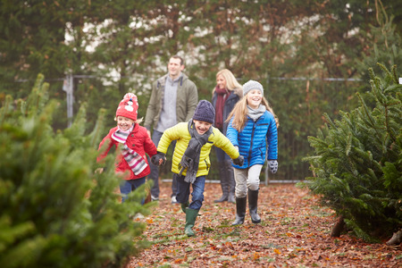 old tree: Outdoor Family Choosing Christmas Tree Together Stock Photo