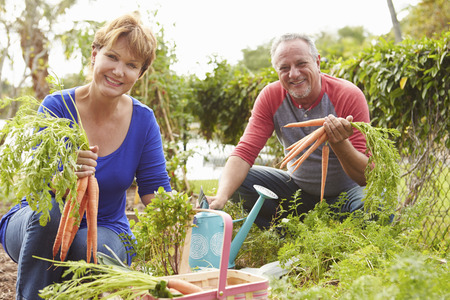 Senior Couple Working On Allotment Together