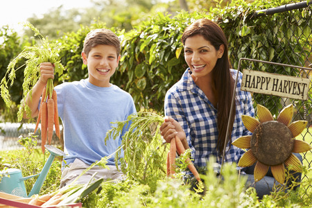 self sufficient: Mother And Son Working On Allotment Together