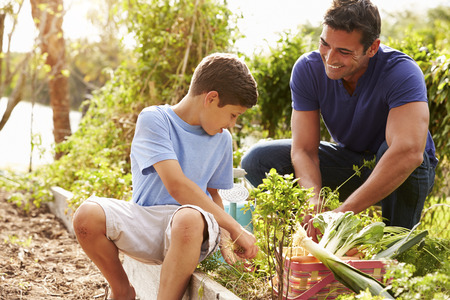 Father And Son Working On Allotment Together Stock Photo