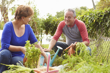 self sufficient: Senior Couple Working On Allotment Together