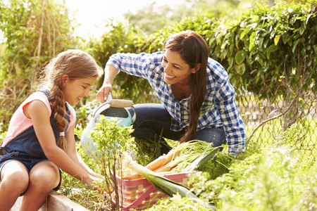 Mother And Daughter Working On Allotment Together Reklamní fotografie - 33550436
