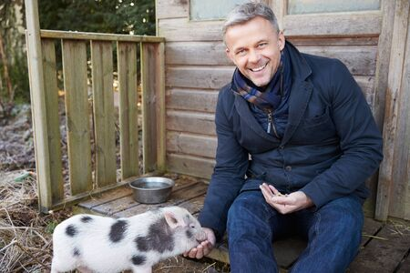 micro: Mature Man Feeding Pet Micro Pig Stock Photo