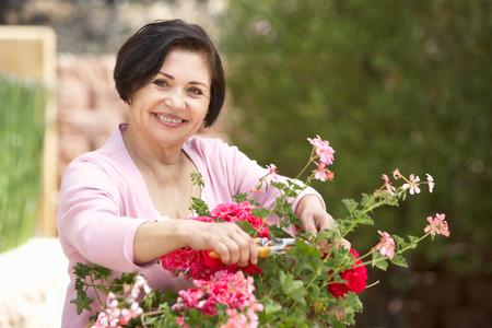 adulto mayor feliz: Mujer mayor hispana que trabaja en jard�n el poner en orden Ollas Foto de archivo