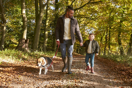 Father And Son Walking Dog In Autumn Woodland Together Reklamní fotografie