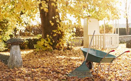 Autumn Garden Scene With Rake And Wheelbarrow Stock Photo