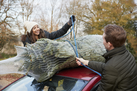 securing: Young couple securing a Christmas tree to the roof of a car
