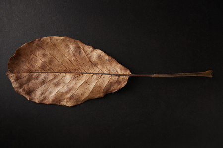 Brown oval Autumn leaf on black background, horizontal