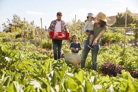 家族一緒に割当てからの農産物を収穫