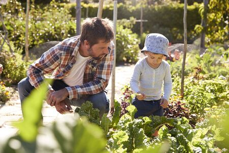 self sufficient: Son Helping Father As They Work On Allotment Together Stock Photo