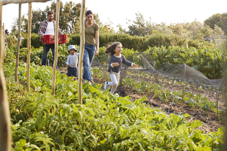 Family Harvesting Produce From Allotment Together Banco de Imagens - 84592907