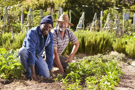 self sufficient: Portrait Of Two Men Working Together On Community Allotment