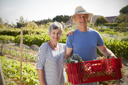 self sufficient: Portrait Of Mature Couple With Crate Of Produce On Allotment Stock Photo