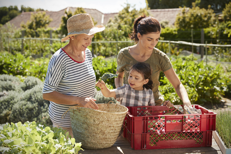 self sufficient: Mother With Adult Daughter And Granddaughter On Allotment
