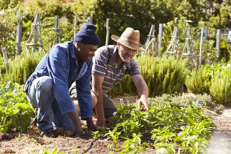 self sufficient: Two Men Working Together On Community Allotment