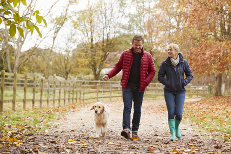Mature Couple On Autumn Walk With Labrador