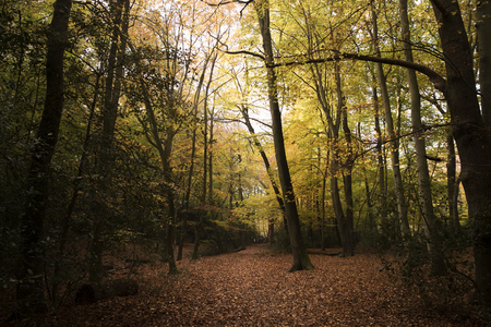Burnham Beeches, UK - 7 November 2016: Dense Woodland At Burnham Beeches In Buckinghamshire Imagens