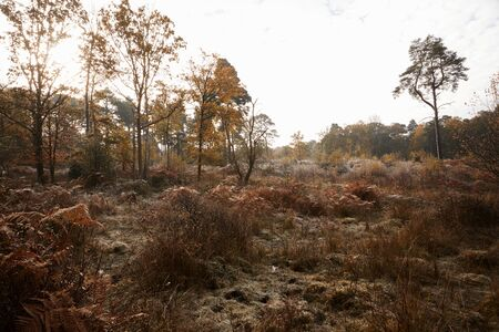 Burnham Beeches, Verenigd Koninkrijk - 7 november 2016: Autumn Trees and Bracken At Burnham Beeches In Buckinghamshire