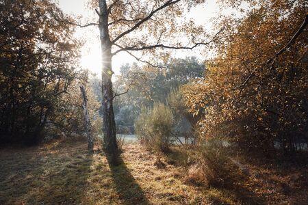 Burnham Beeches, UK - 7 November 2016: Frosty Autumn Landscape At Burnham Beeches In Buckinghamshire