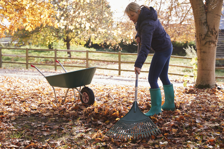Mature Woman Raking Autumn Leaves In Garden