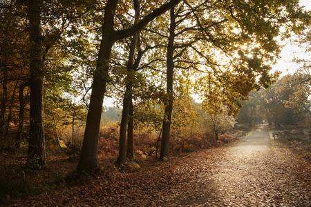 Burnham Beeches, UK - 7 November 2016: Road Through Autumn Trees At Burnham Beeches In Buckinghamshire