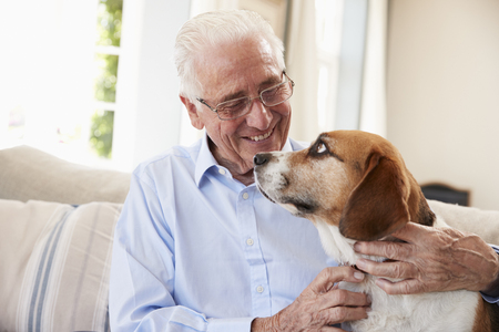 Senior Man Sitting On Sofa At Home With Pet Beagle Dog
