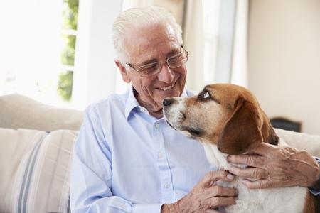 Uomo senior che si siede su Sofa At Home With Pet Beagle Dog Archivio Fotografico - 90297782