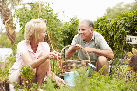 Senior Couple Working On Allotment Together Banco de Imagens - 101641276