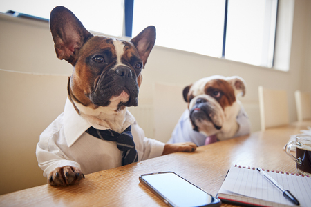 Two Dogs Dressed As Businessmen Having Meeting In Boardroom
