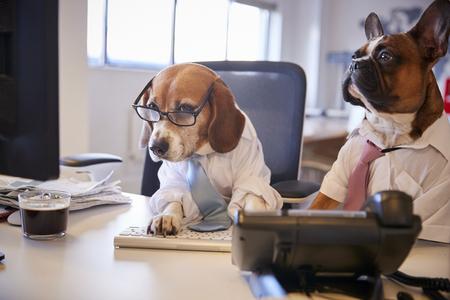 Bulldog y Beagle vestidos como empresarios en un escritorio con computadora Foto de archivo