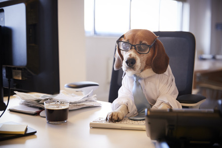 Beagle Dressed As Businessman Works At Desk On Computer