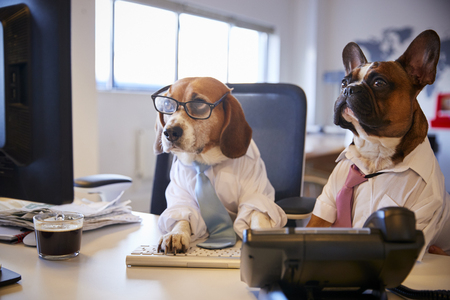 Bulldog And Beagle Dressed As Businessmen At Desk With Computer