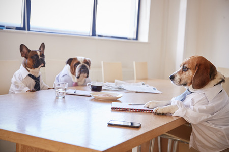Three Dogs Dressed As Businessmen Having Meeting In Boardroom