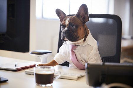 French Bulldog Dressed As Businessman Works At Desk On Computer 免版税图像