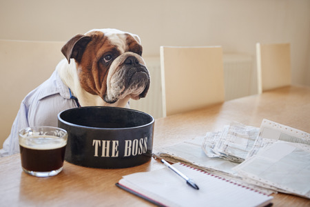Dog Dressed As Businessmen Eating From Bowl Labelled The Boss