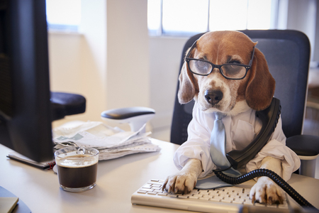 Beagle Dressed As Businessman At Desk Taking Phone Call Banque d'images