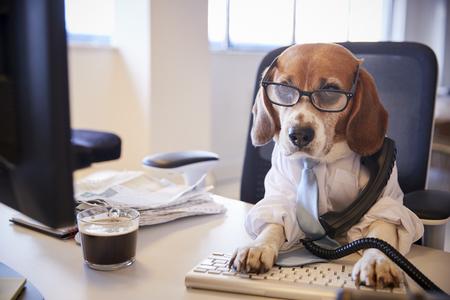 Beagle disfrazado de empresario en el escritorio tomando llamadas telefónicas