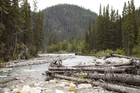 River Running Through Wooded Valley Between Mountains In Alaska With Fallen Trees