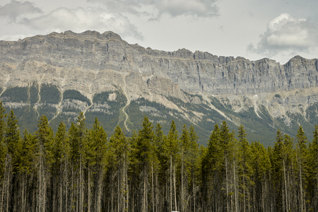 Forest Tree Line With Mountains Behind In Alaska
